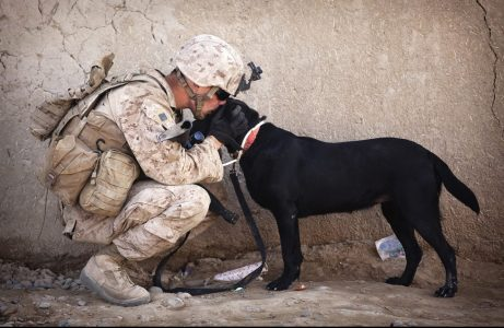 soldier dog companion service