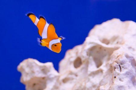 clownfish_194879