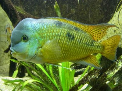 fish_water_animal_215301