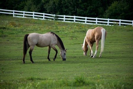 horse_animals_grass_596913